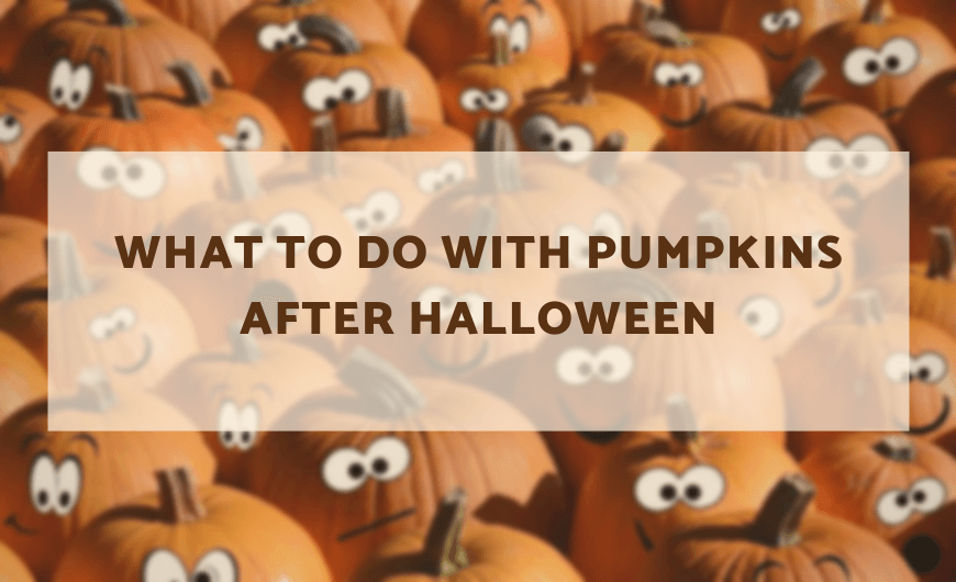 What to Do With Halloween Pumpkin