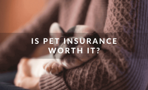 Is Pet Insurance Worth It