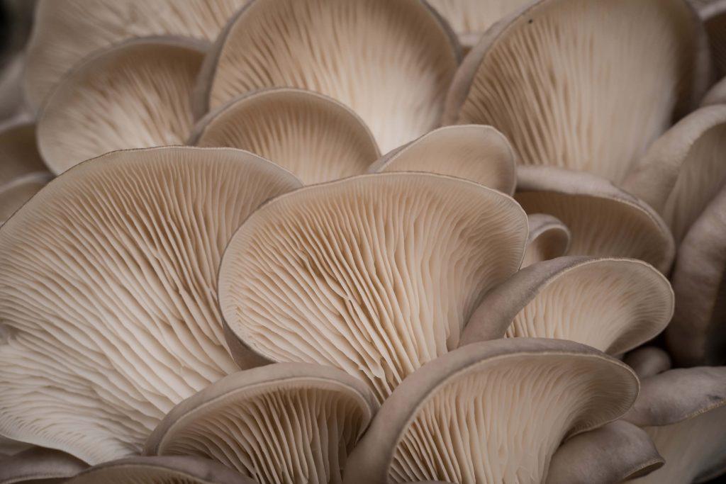 mushroom farm christmas gift 1