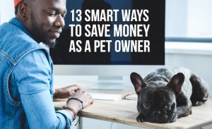 K16 13 Smart Ways To Save Money As A Pet Owner