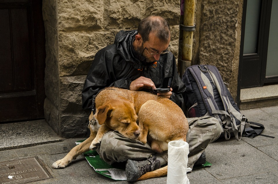 consider donating pet food to the needy