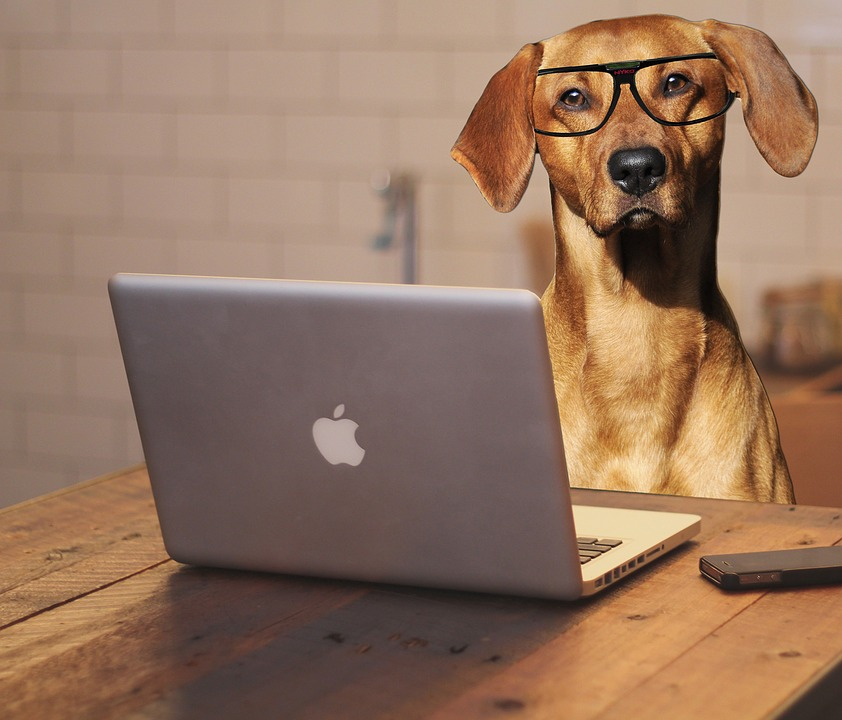 how to save money on dog food by shopping online