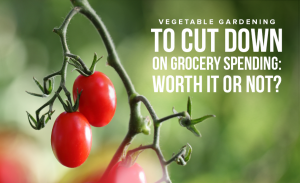 M7 Vegetable Gardening to Cut Down on Grocery Spending Worth It or Not