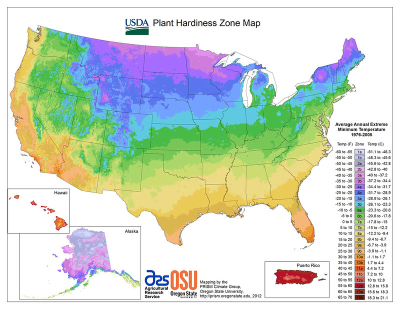 climate and growing your own vegetables