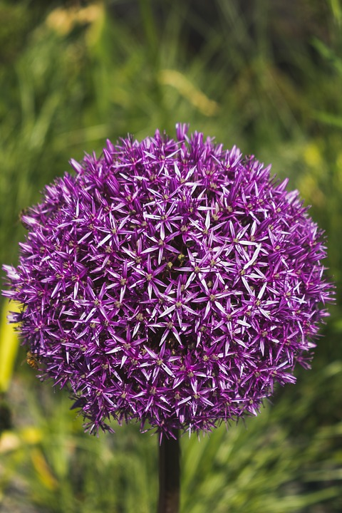 companion planting repels insects