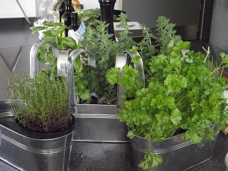 herbs make great cheap gifts